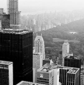 DOLPHIN DAYS #2 - NYC