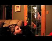 Master Splinter SK8RATS Commercial