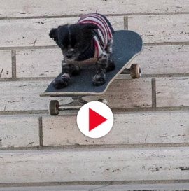 "Murdy the Dawg's ""Bark and Destroy"" Part"